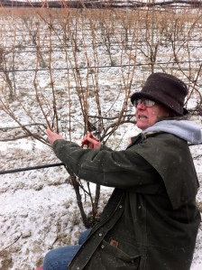 Marti showing us how to prune the Gewurtzaminer vines