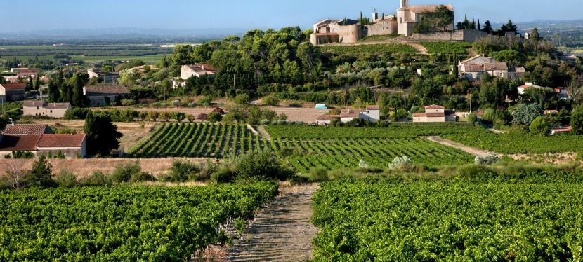 A New Appellation, Ivy MixProfile