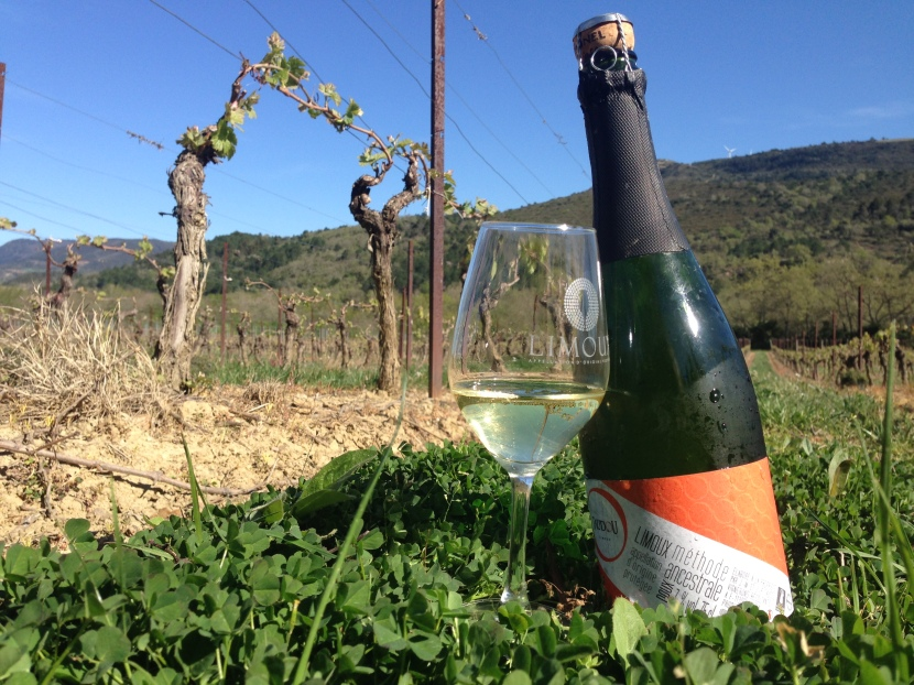Picpoul + Limoux, Two Languedoc Appellations ToKnow