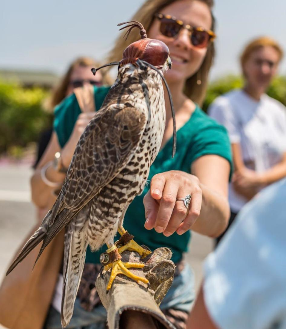 rachel-and-falcon