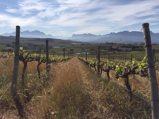 The Zoo Biscuits: A Group Of Winemakers (Not Children's Cookies) Defining The New SouthAfrica